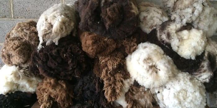 shetland-sheep-wool